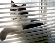 Kat i vinduet